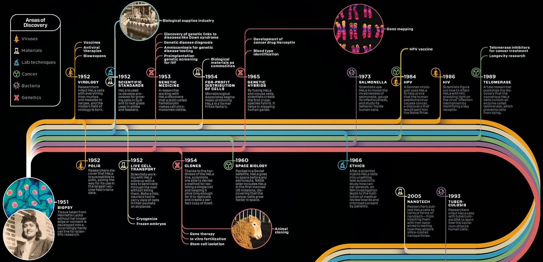 HeLa cells timeline.